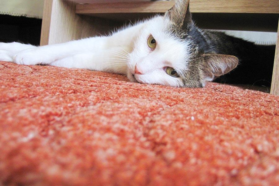 trio-hali-kedi